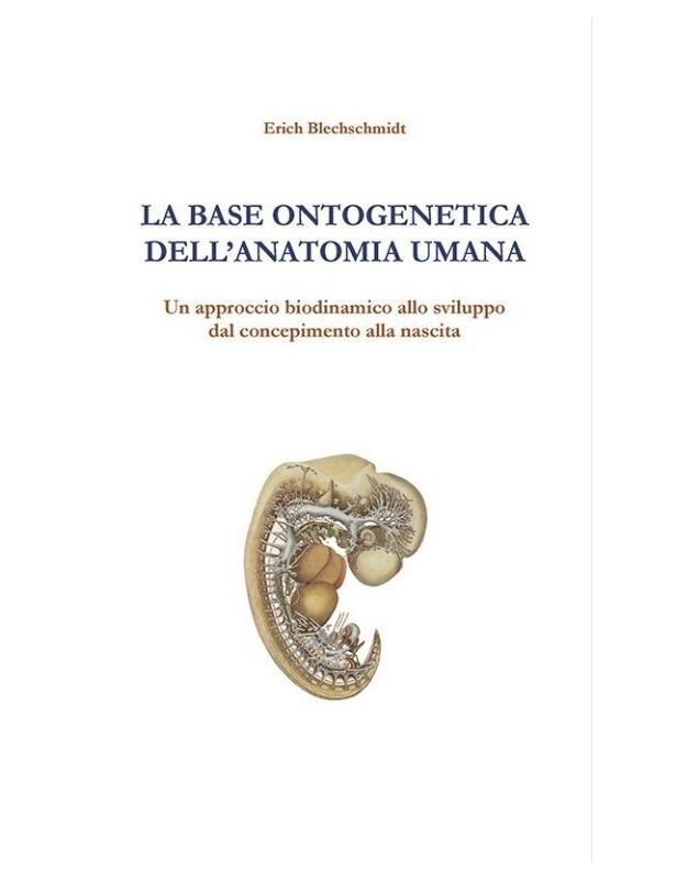 La base ontogenetica dell'anatomia...