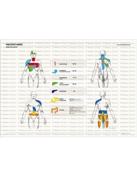 OsteoPoster Viscerotomi Sistema digestivo Orizzontale