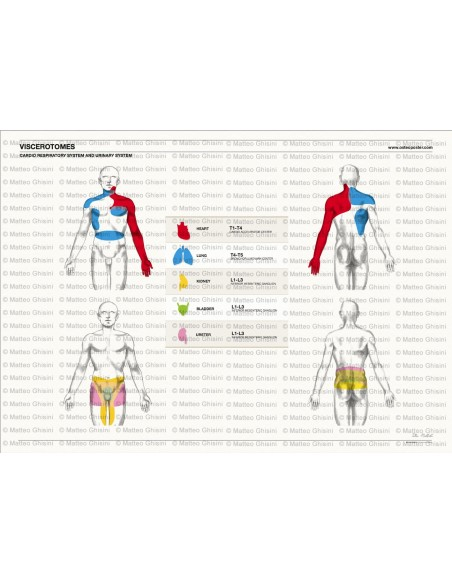 OsteoPoster Viscerotomi Sistema Cardio e Urinario Orizzontale