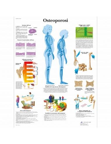 3B Scientific, tavola anatomica,...