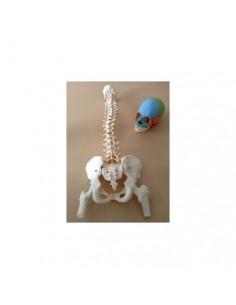 Offerta Ossa 3B Scientific: Cranio A291, Colonna A58/2