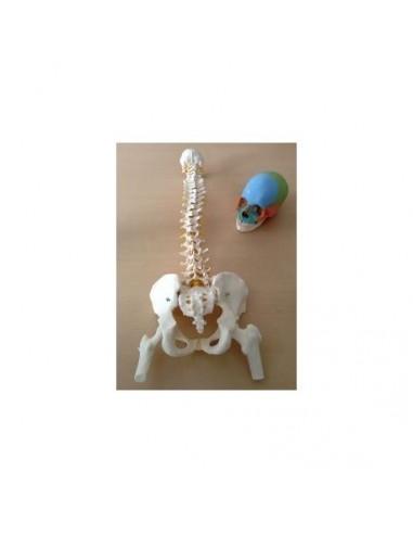 Offerta Ossa 3B Scientific: Cranio...